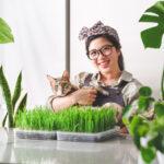 室內種小麥草